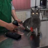 Hipertensiunea arteriala la caine si pisica